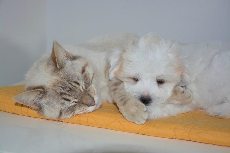 assurances chien chat